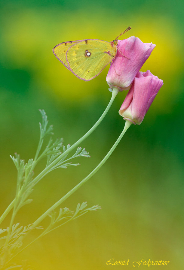 Photograph In A Yellow Tone (2) by Leonid Fedyantsev on 500px