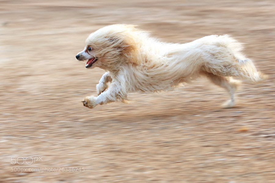 Photograph Running  by Prachit Punyapor on 500px