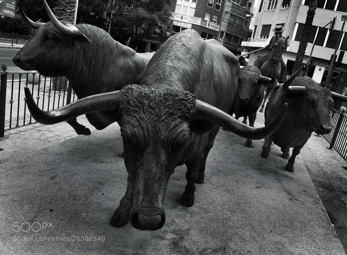 Photograph Bulls by Gonzalo Ramos on 500px