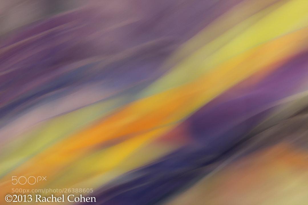 Spring Stream by Rachel Cohen