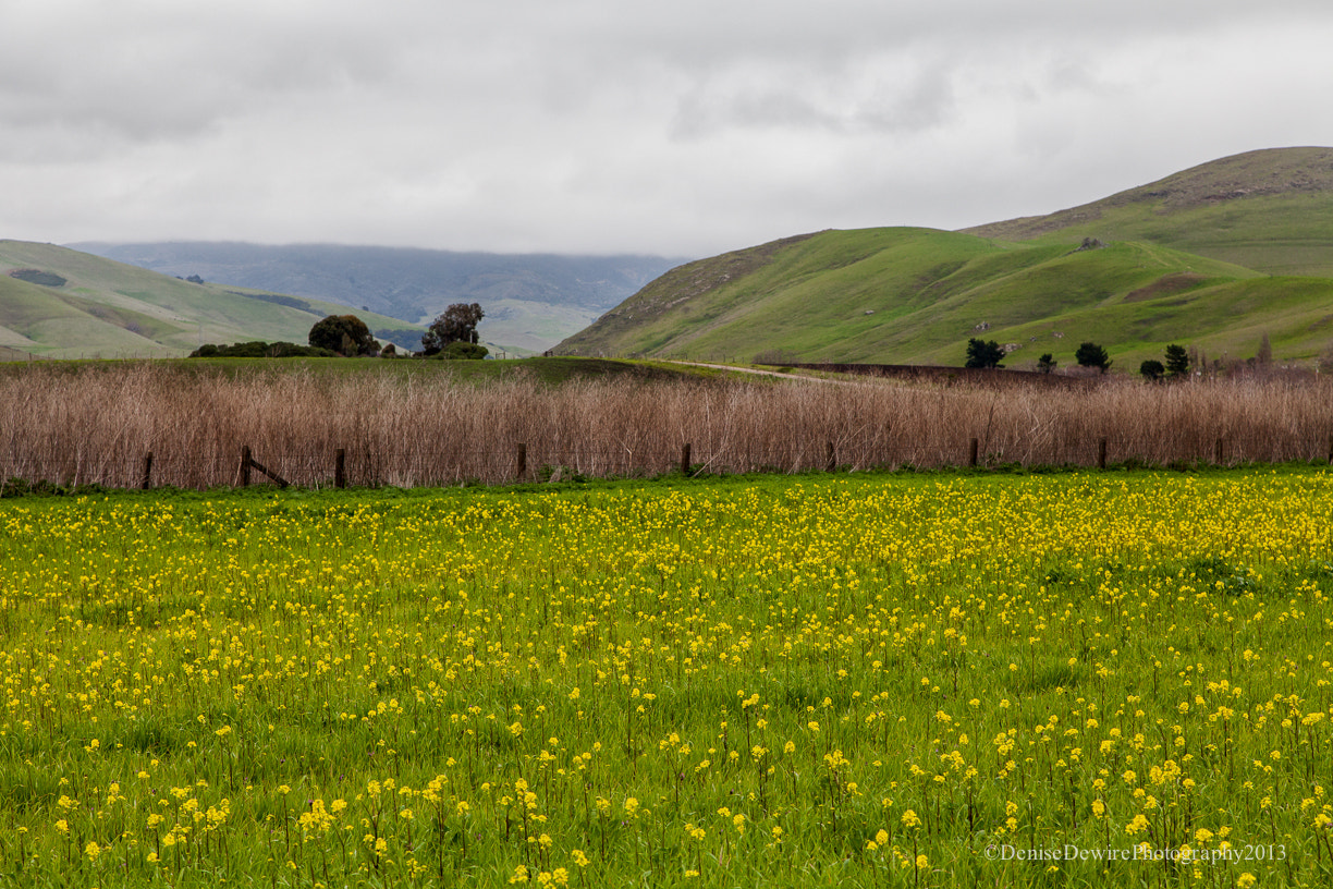 Photograph Mustard Field by Denise Dewire on 500px