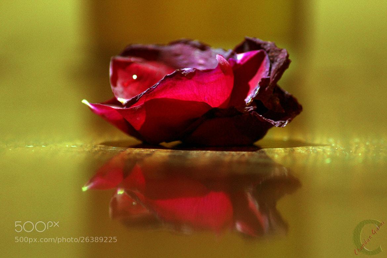 Photograph i Reflect by CHANDAN GARAI on 500px