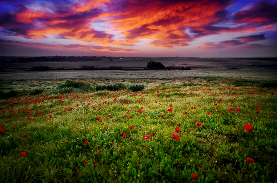 Photograph Spots by Guy Cohen on 500px