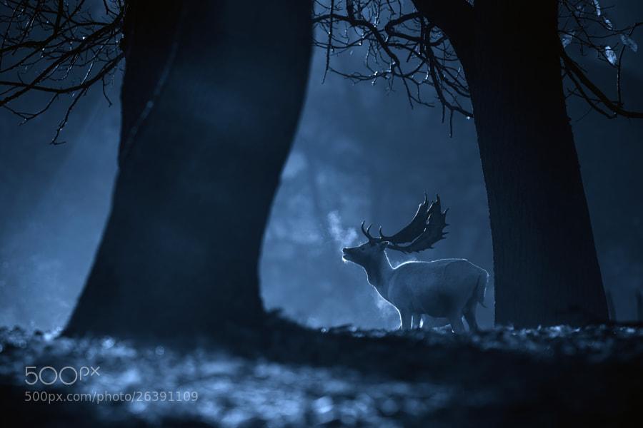 Awesome photography inspiration #4 - Mark Bridger