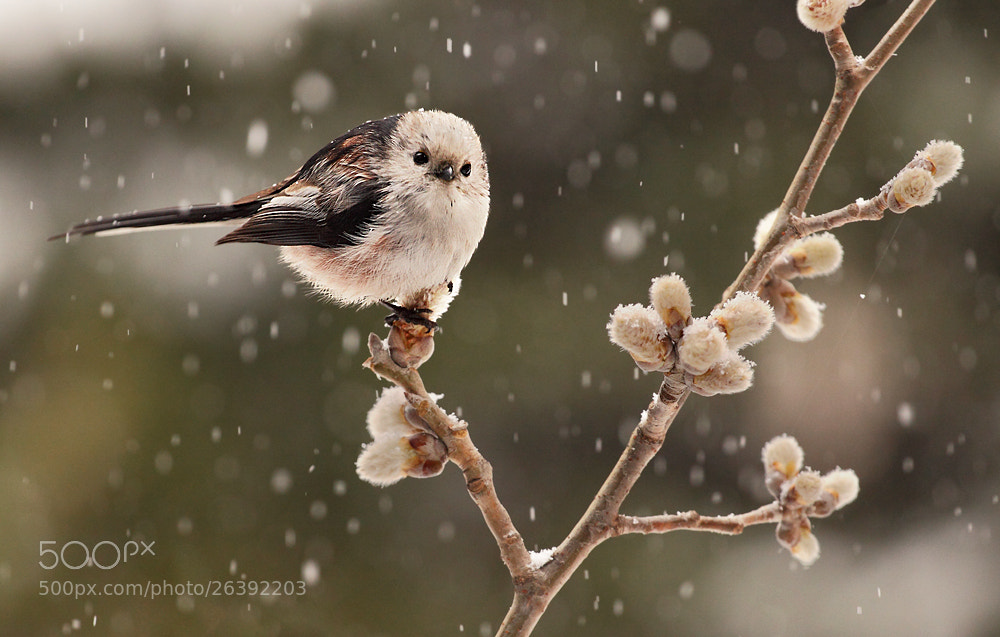 Photograph Snow by Hencz Judit on 500px
