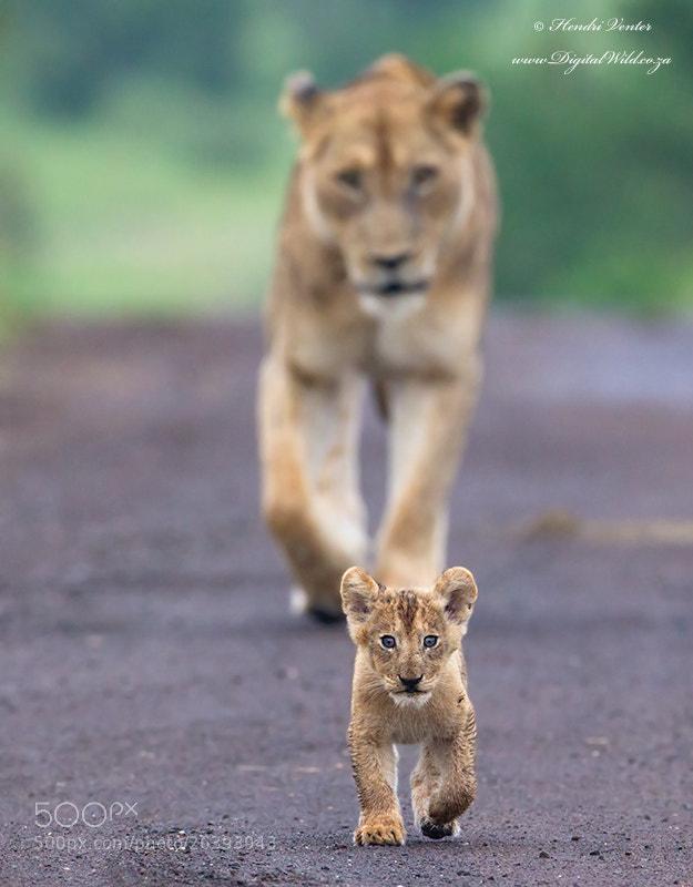 Photograph Future Leader by Hendri Venter on 500px