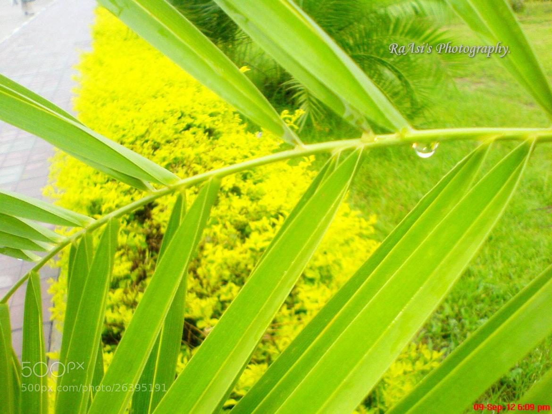Photograph Dew Drops iiui... by Raazia RaAsi.. on 500px