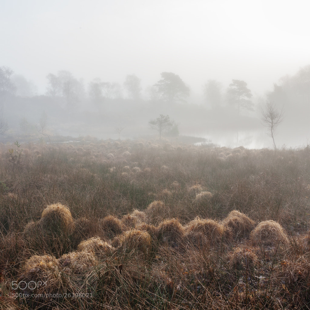 Photograph Corfe swamp, Dorset by Simon Byrne on 500px