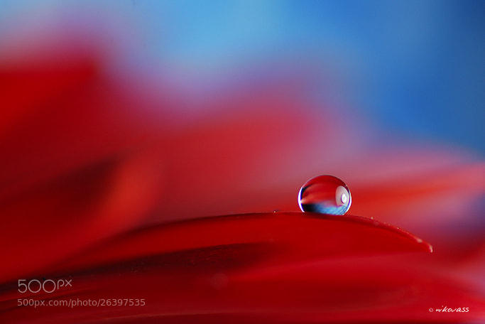 Photograph Red/Blue Drop by Niko Vass on 500px
