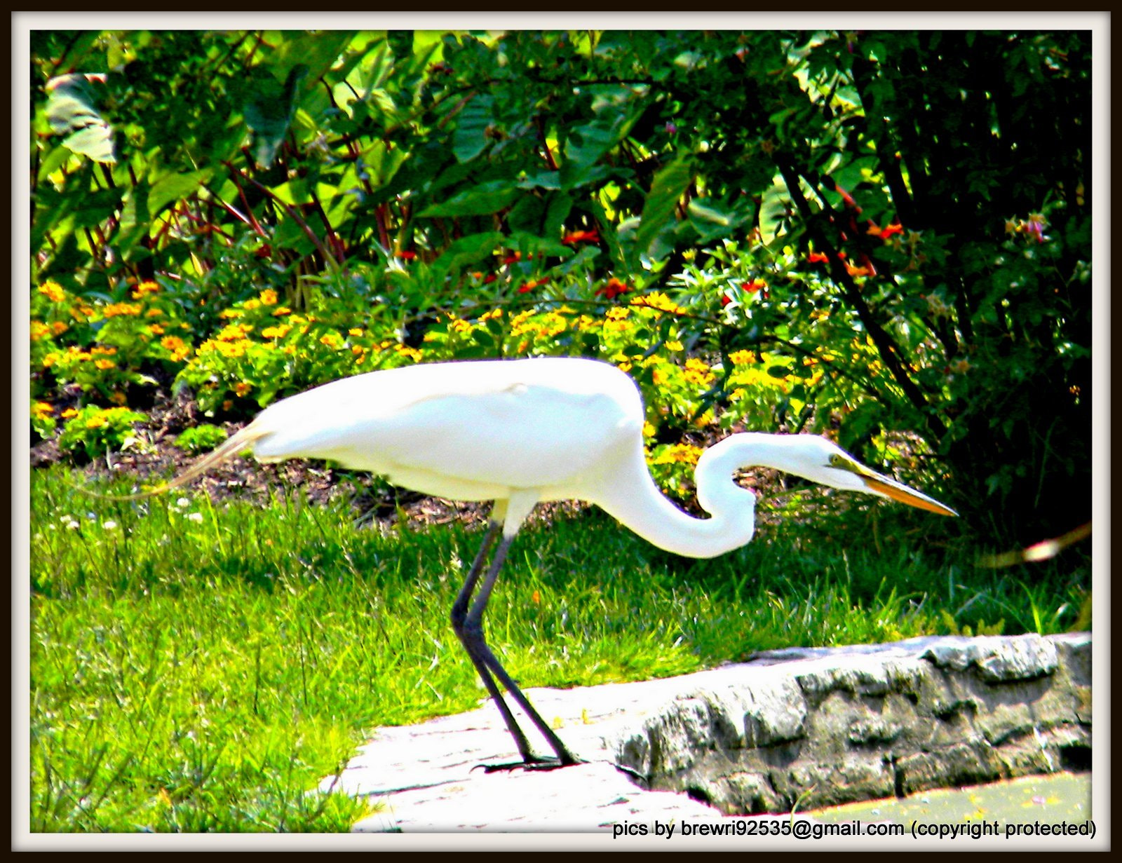 Photograph IBIS by Brenda Wright on 500px