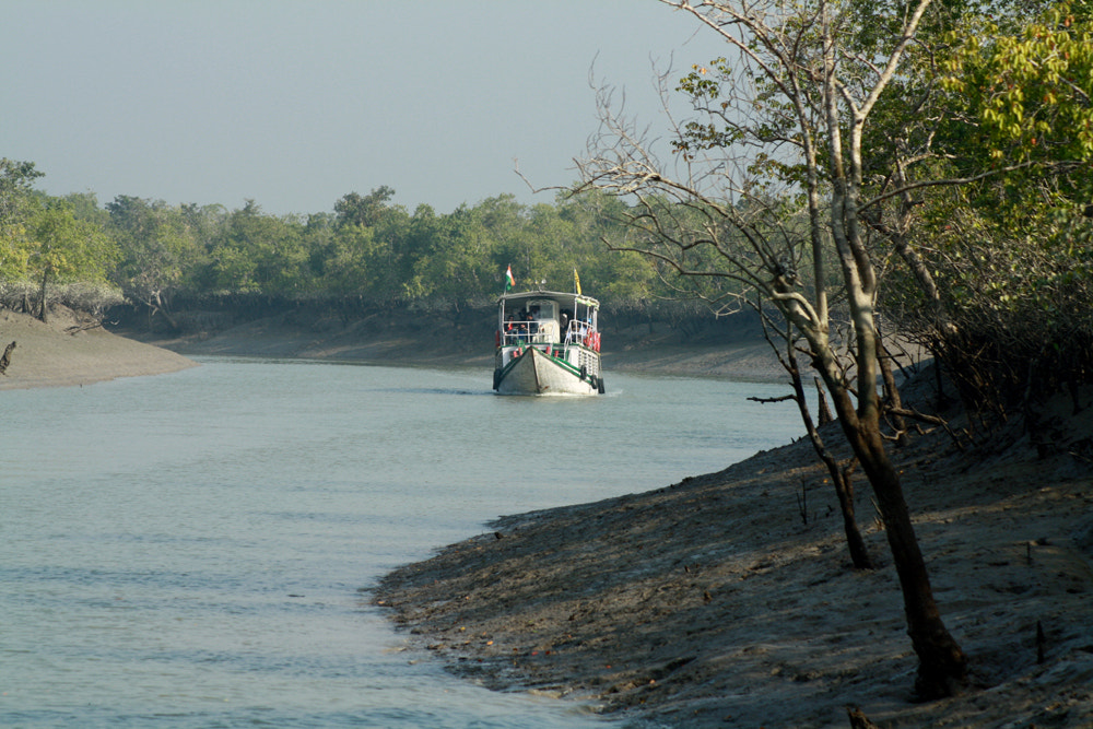 Photograph delta, mangrove forest of Sundarban by saptarshi biswas on 500px