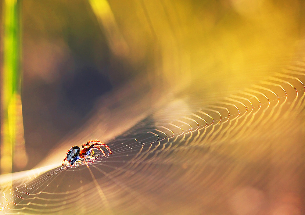 Photograph Spider world by Marcsi Kesjarne on 500px