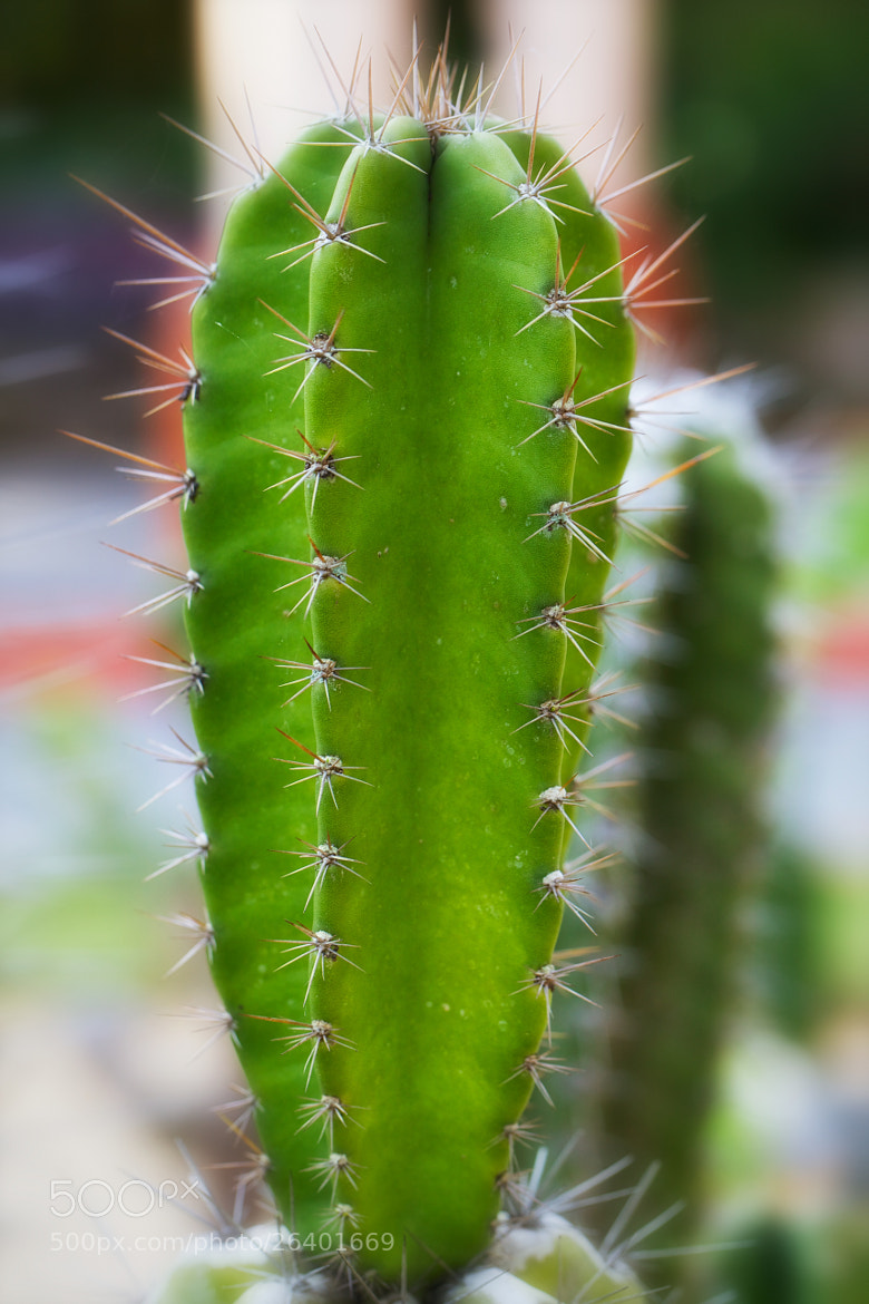 Photograph Cactus by Mahmud Ahsan on 500px