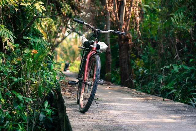 Bicycle lost in the Jungle by Julien Vernet
