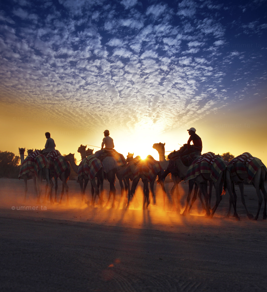 Photograph camel ride by Artist Ummer Ta  on 500px