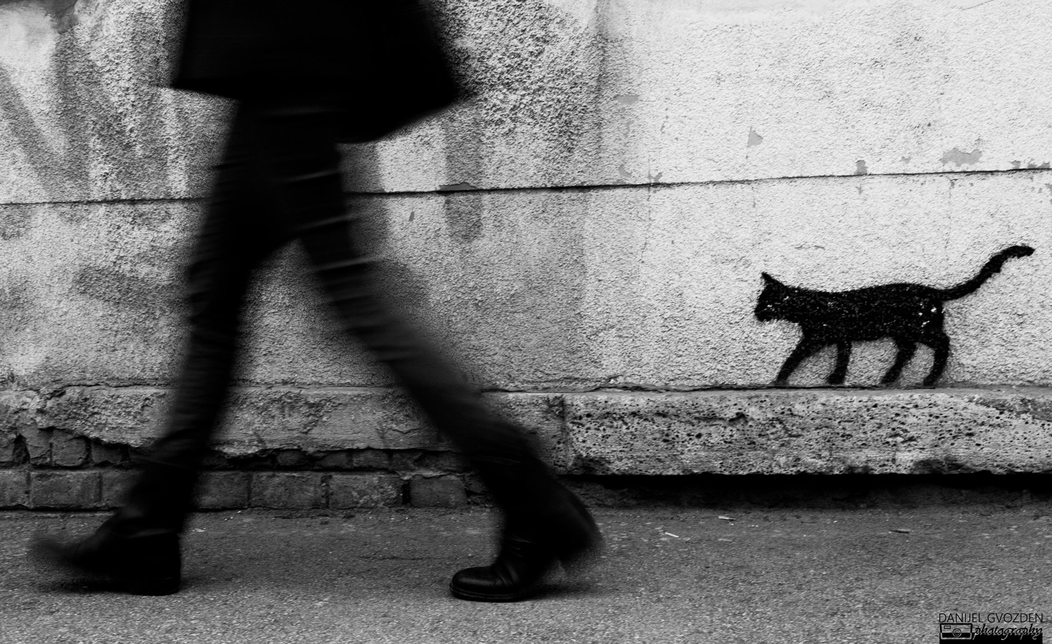 Photograph graffiti cat by danijel gvozden on 500px