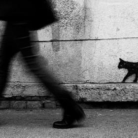graffiti cat by danijel gvozden (GvozdenDanijel)) on 500px.com