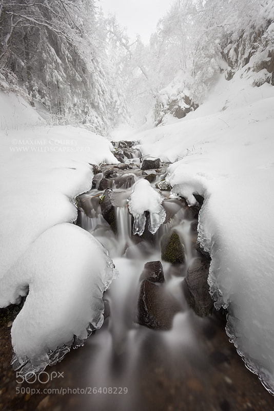 Photograph A little brook flowing in the white winter by Maxime Courty on 500px