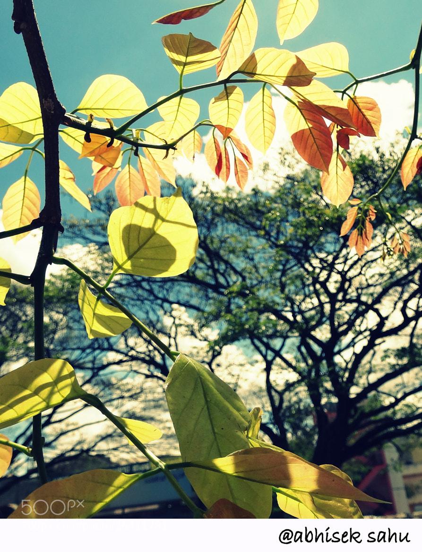 Photograph beautiful nature by Abhisek Sahu on 500px