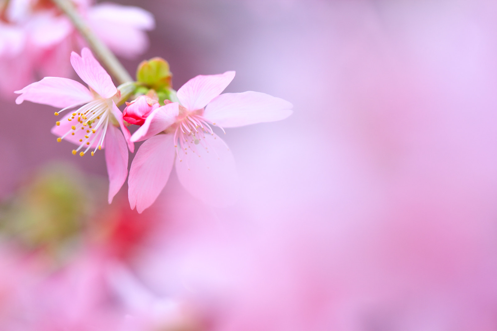 Photograph back to back by Huan-wei Hu on 500px