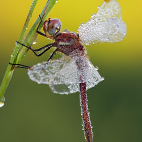 The wEt DaNcEr by Alberto Di Donato (albydido)) on 500px.com