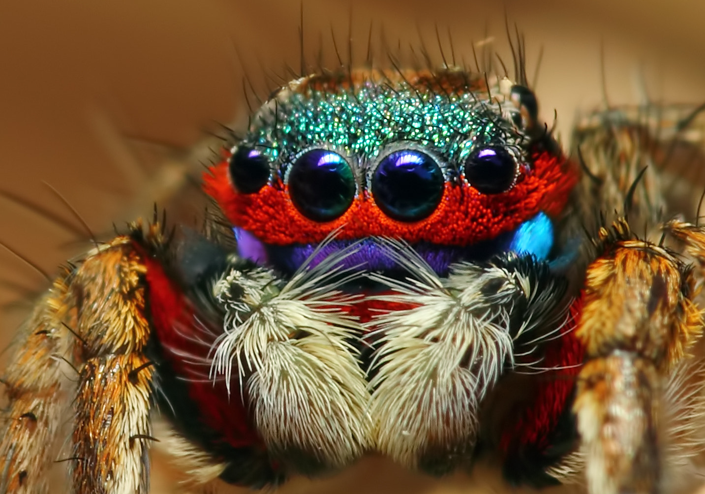 Photograph Colorful Jumping Spider by karthi keyan on 500px