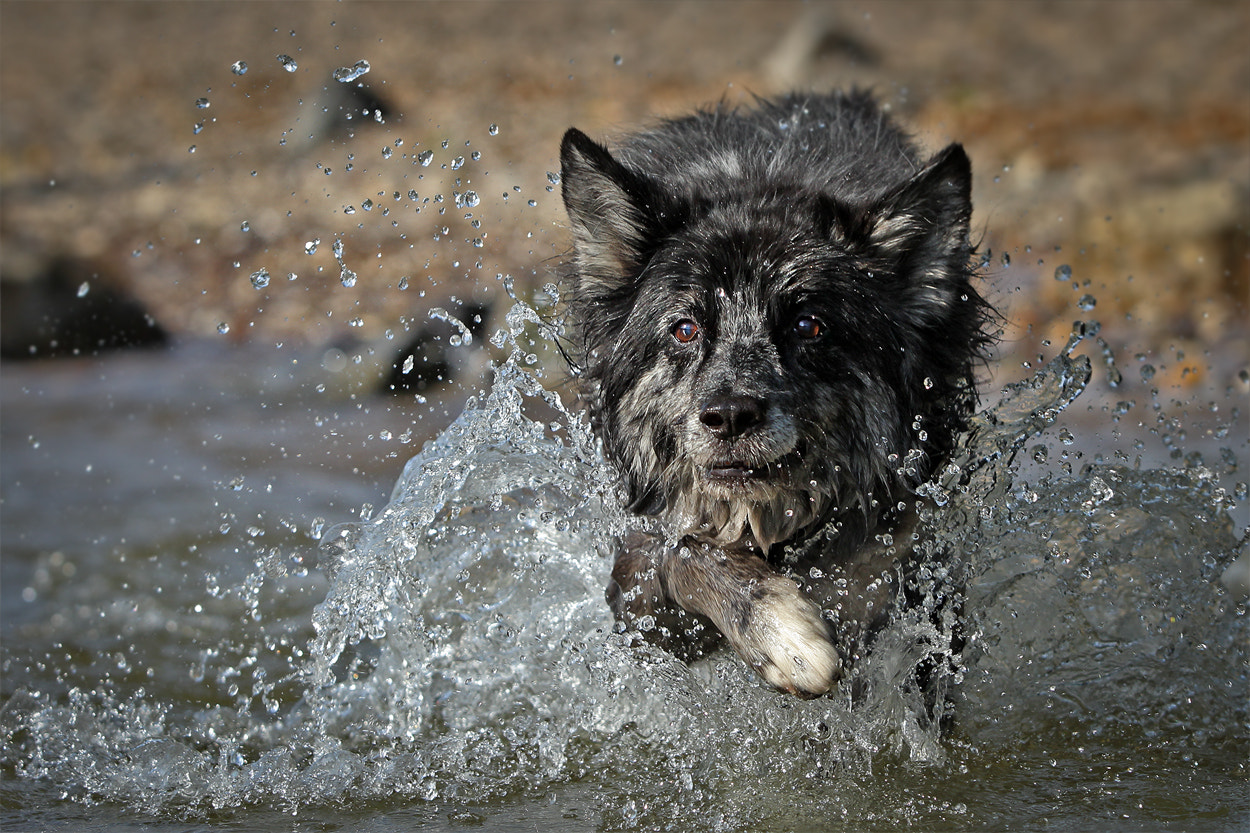 Photograph Lupo`s bathday by Mathias Ahrens on 500px