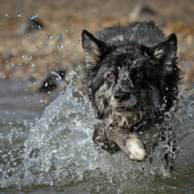 Lupo`s bathday by Mathias Ahrens (Nachtfrost)) on 500px.com