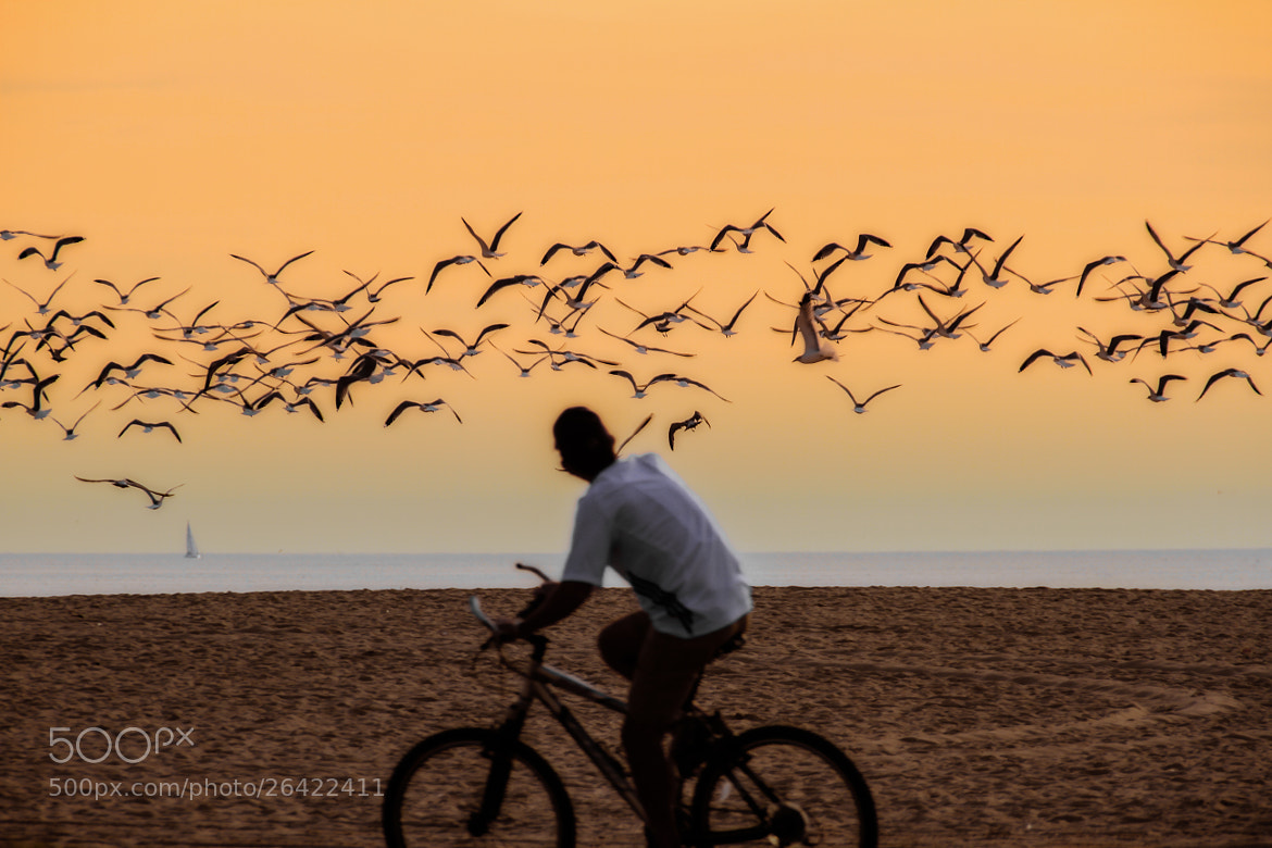 Photograph Birds & Bikes @ Venice Beach by Darren LoPrinzi on 500px