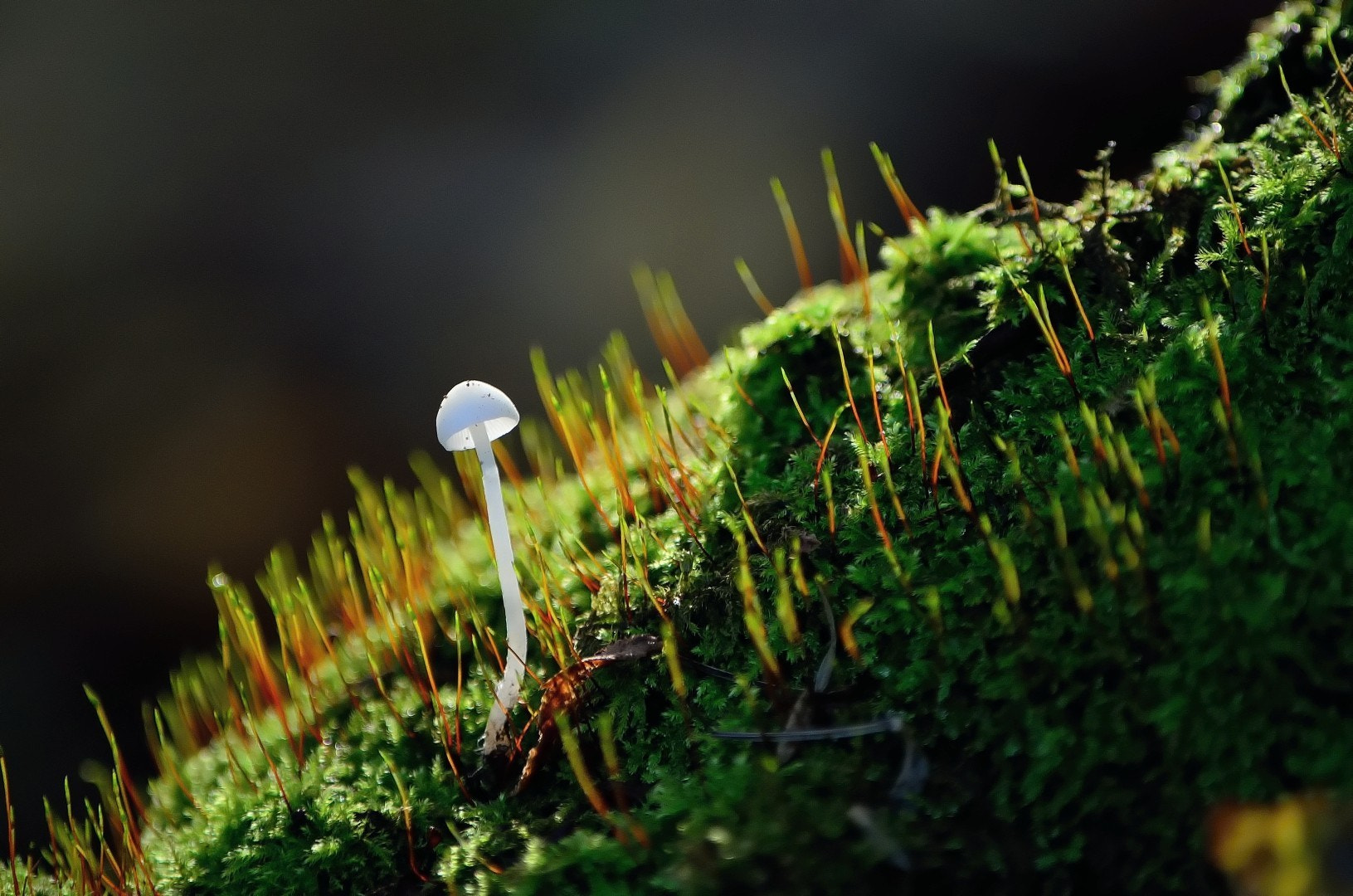 Photograph Lonely mushroom by Ferenc Gelencsér on 500px