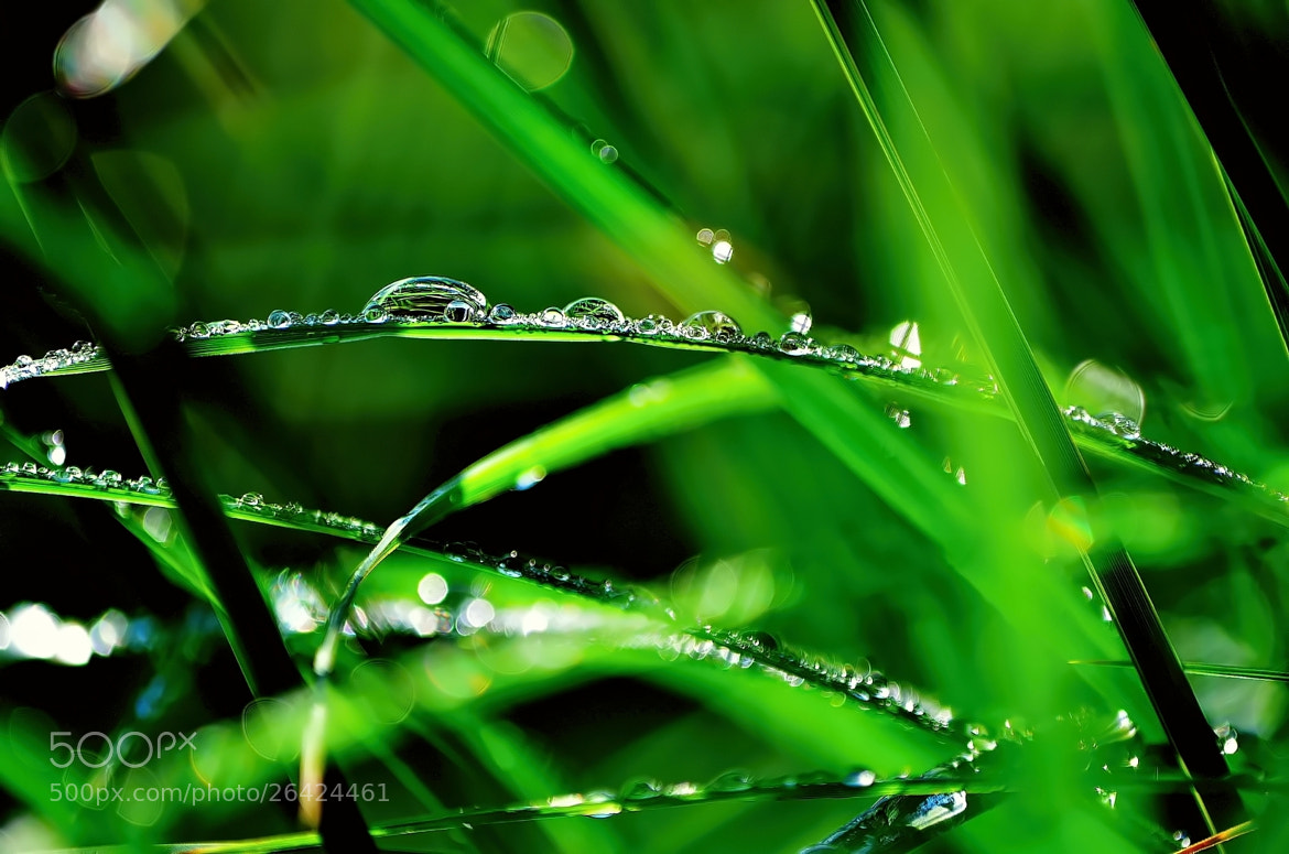 Photograph Dew by Ferenc Gelencsér on 500px