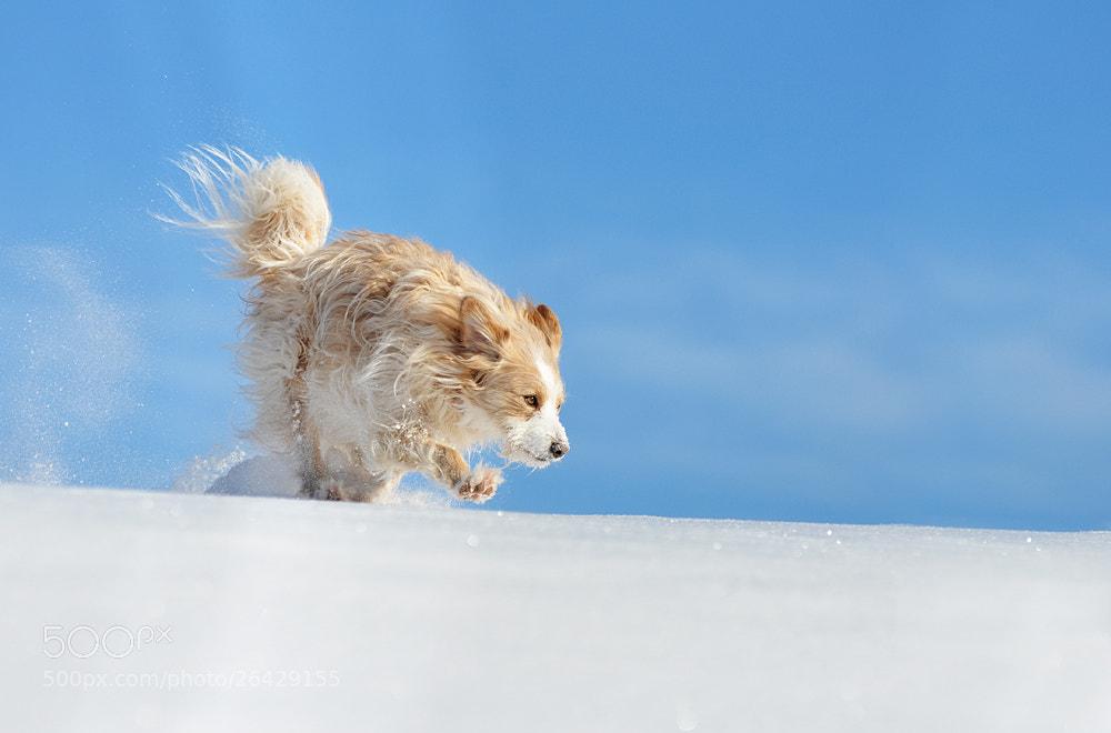 Photograph Ein Portugiese im Schnee by Anne Geier on 500px