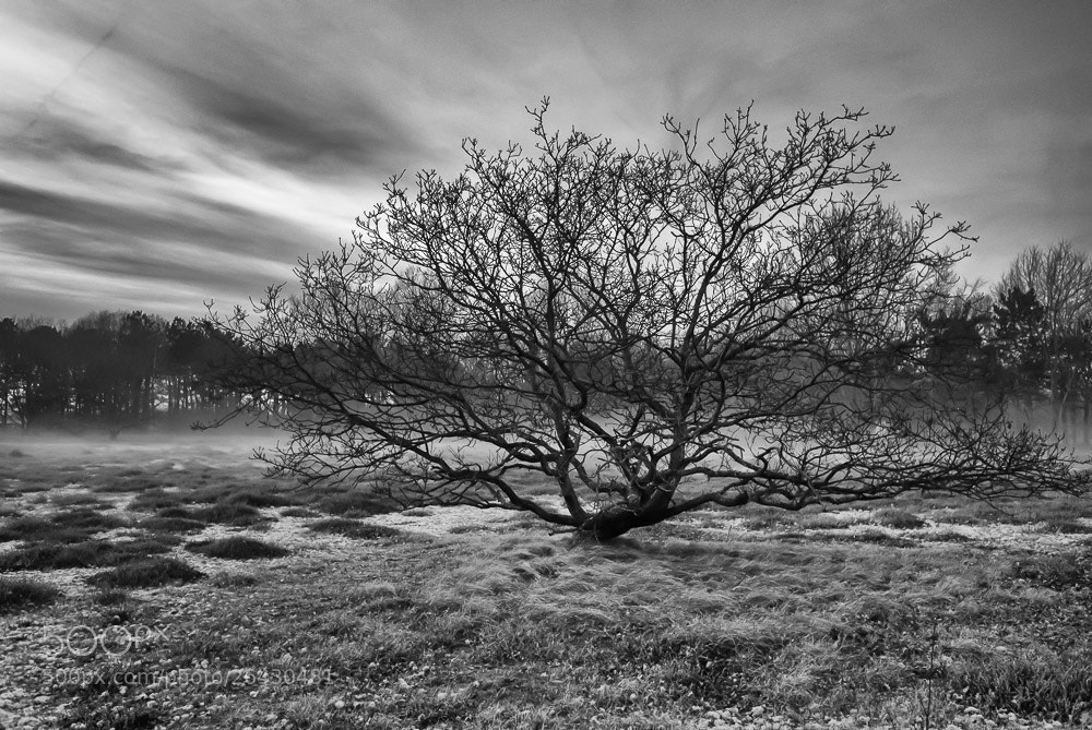 Photograph Solleveld by Piet Osefius on 500px
