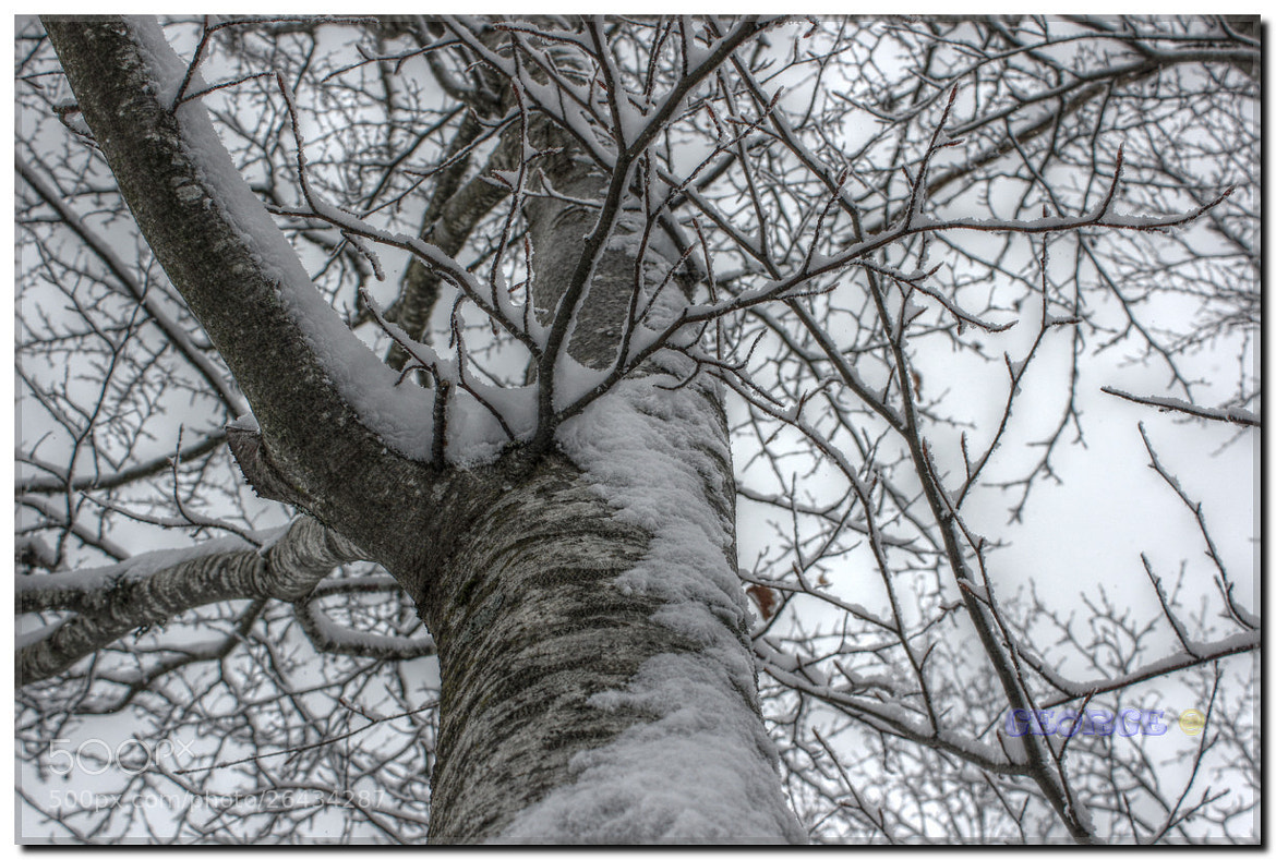 Photograph Snowy branches Graphic - Winter Day by George @ papaki on 500px