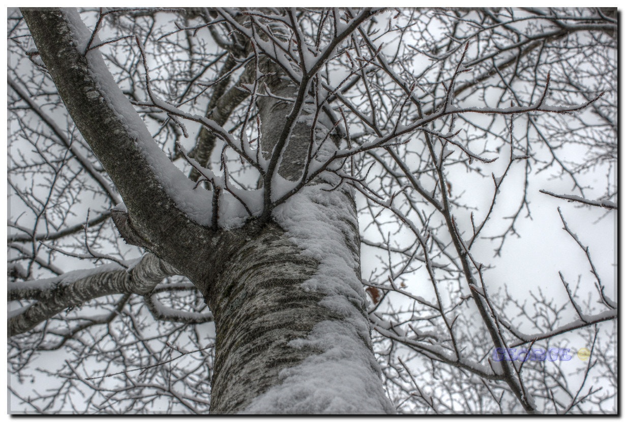 Photograph Snowy branches Graphic - Winter Day by George @  on 500px