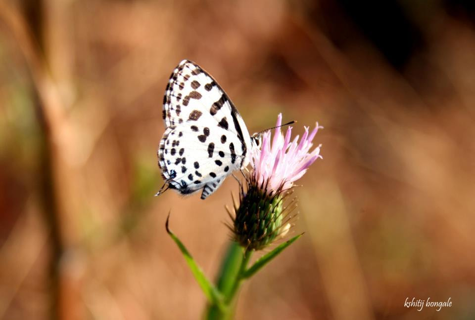 Photograph The Butterfly by Kshitij Bongale on 500px