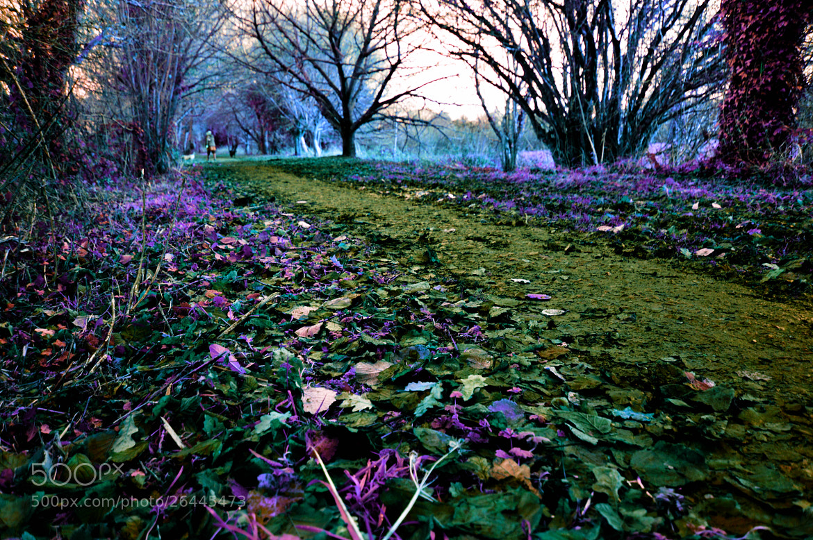 Photograph Magical Woodland by Jasmin Homer on 500px