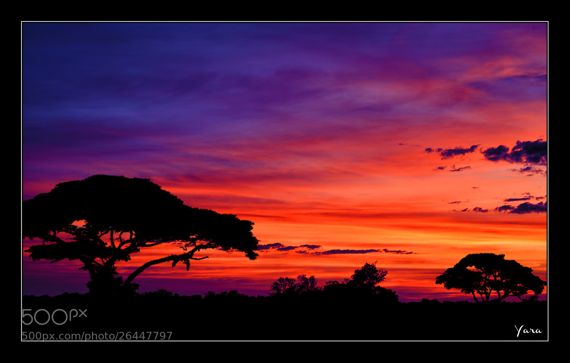 Photograph I dreamed of Africa by yara GB on 500px