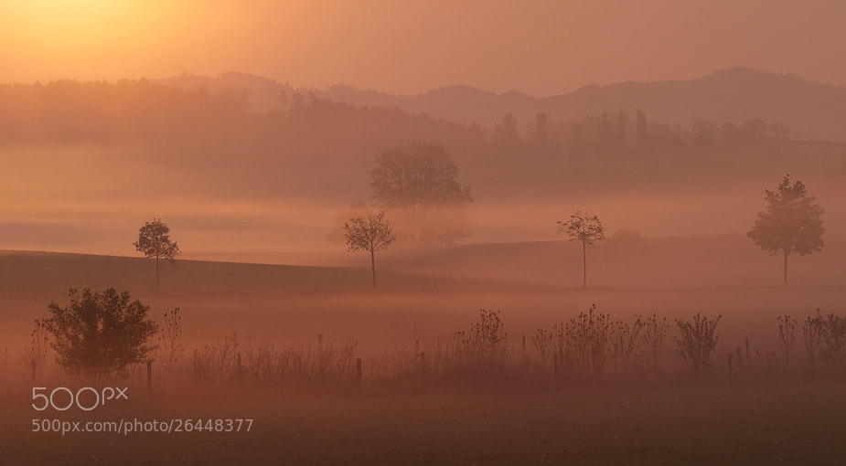 Photograph playing with fog by Koni Frey on 500px