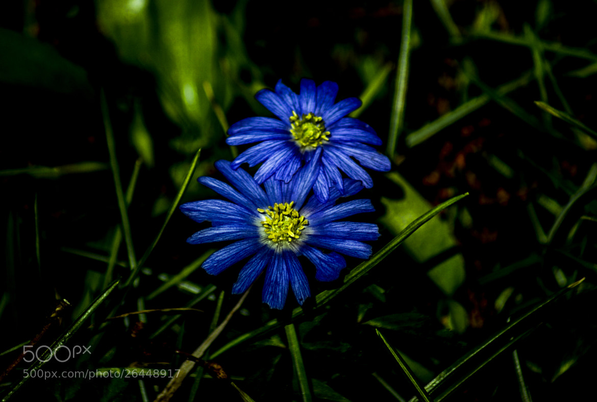 Photograph double blue by Tom Magnum on 500px