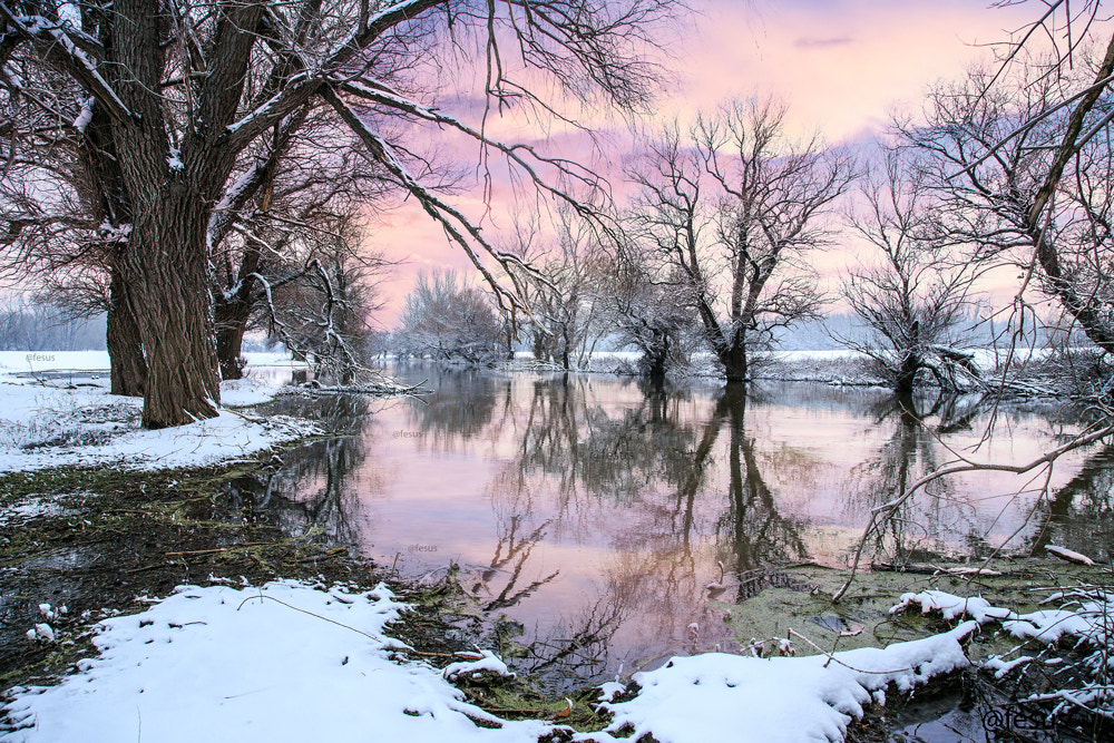 Photograph Winter landscape river Zagyva by F Levente on 500px