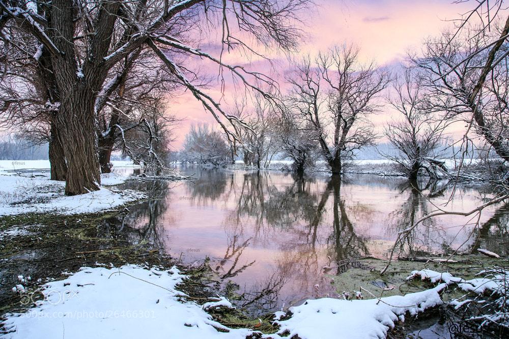 Photograph Winter landscape river Zagyva by F Levente on 500px