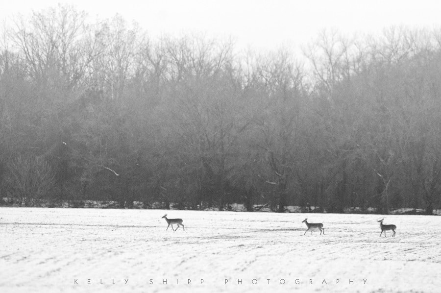 Photograph Field of Snow by Kelly Shipp on 500px