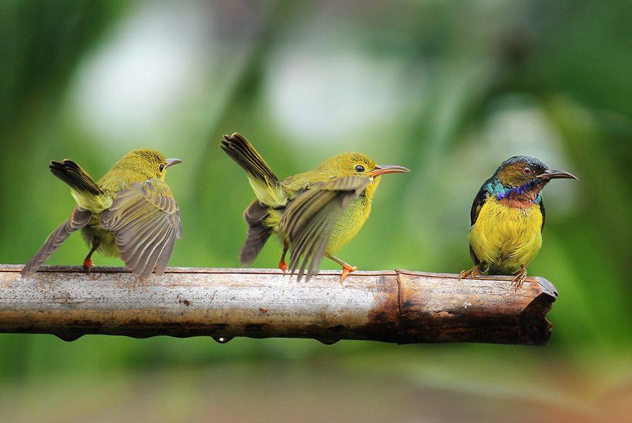 Photograph Learning for food seeking by Prachit Punyapor on 500px