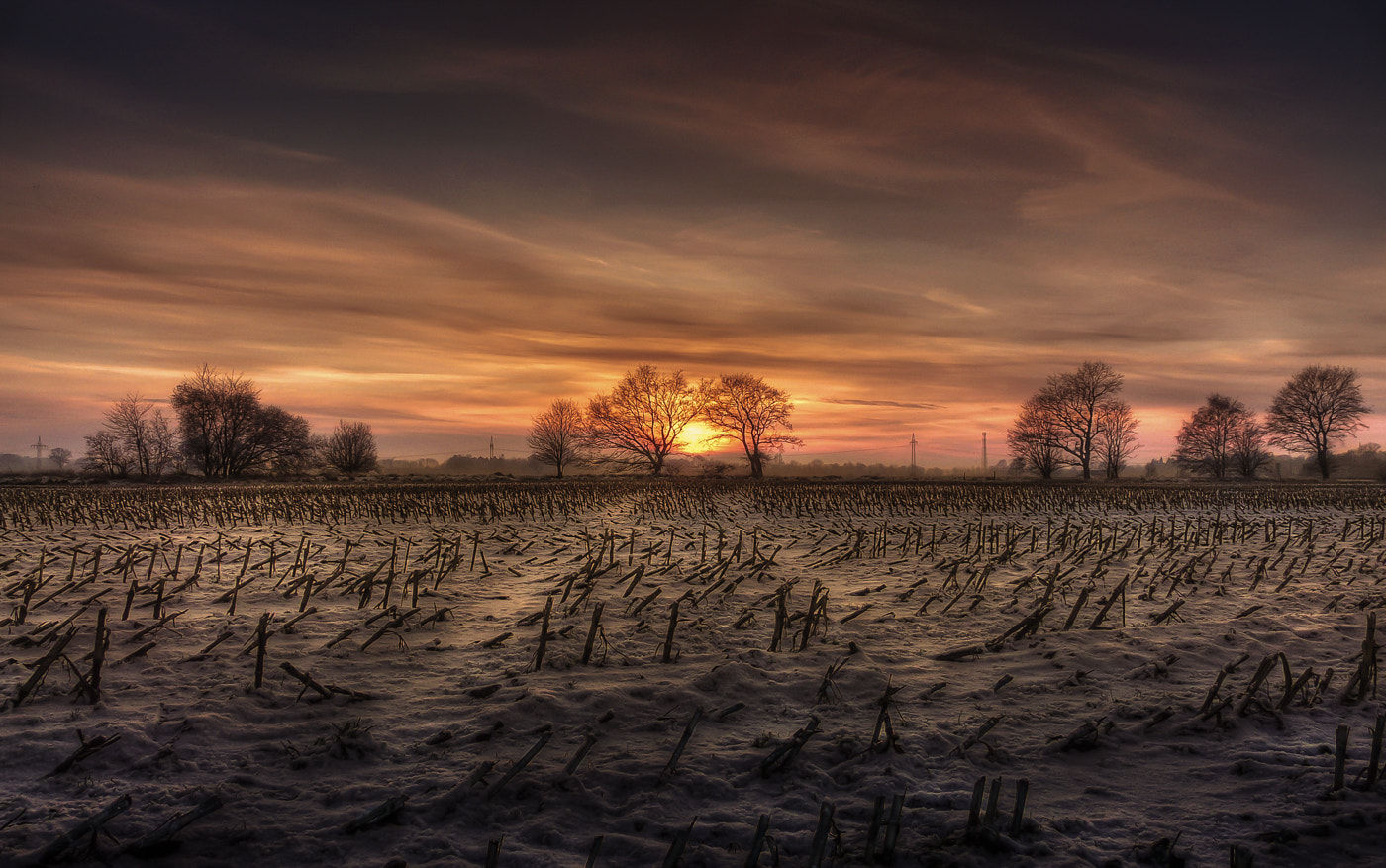 Photograph Corn field at sunset in winter by Jonny Island on 500px