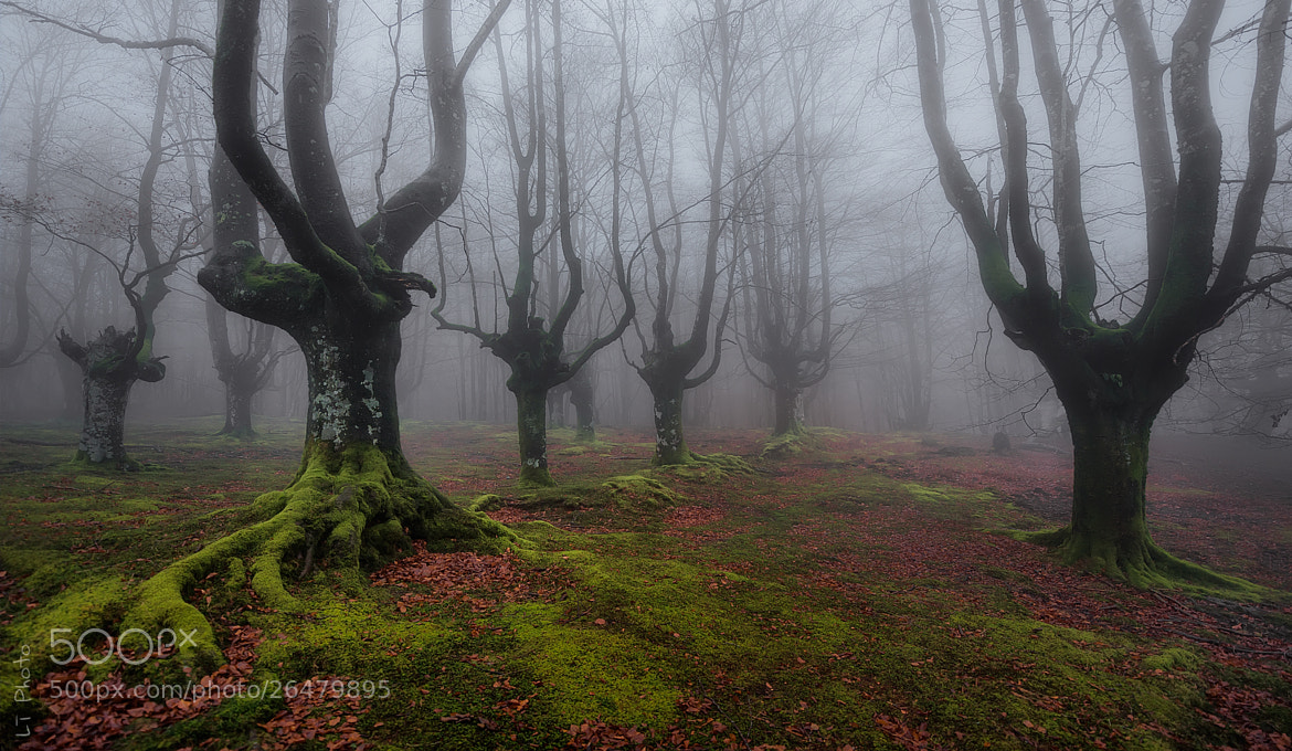 Photograph Lost in the Wood by Javier de la Torre on 500px
