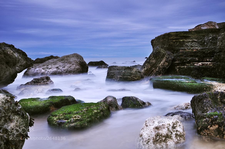 Photograph Algae by Craig Richards on 500px