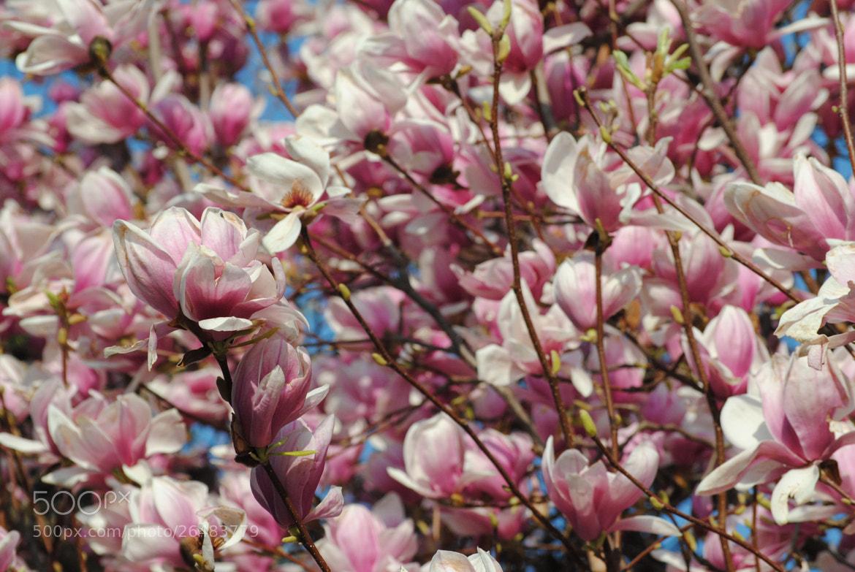 Photograph Spring... by Enrico Baldo on 500px