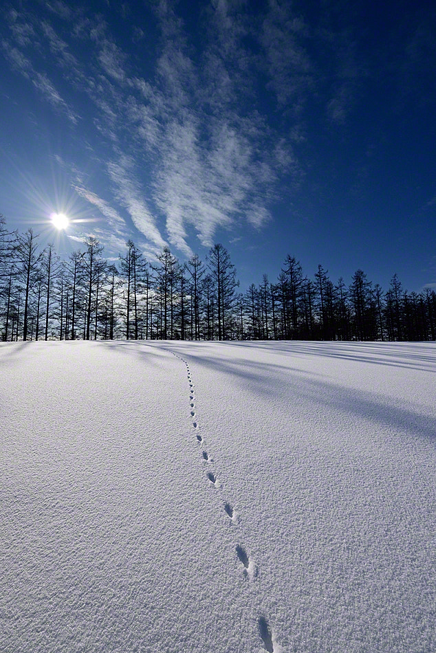 Photograph The footprint in the early morning - Retina Photo by Kent Shiraishi on 500px