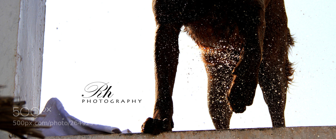 Photograph Doggy by HarsonRh  on 500px